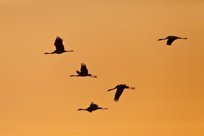 Vogelflugzeit